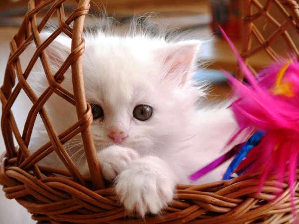 Adorable Baby Cat