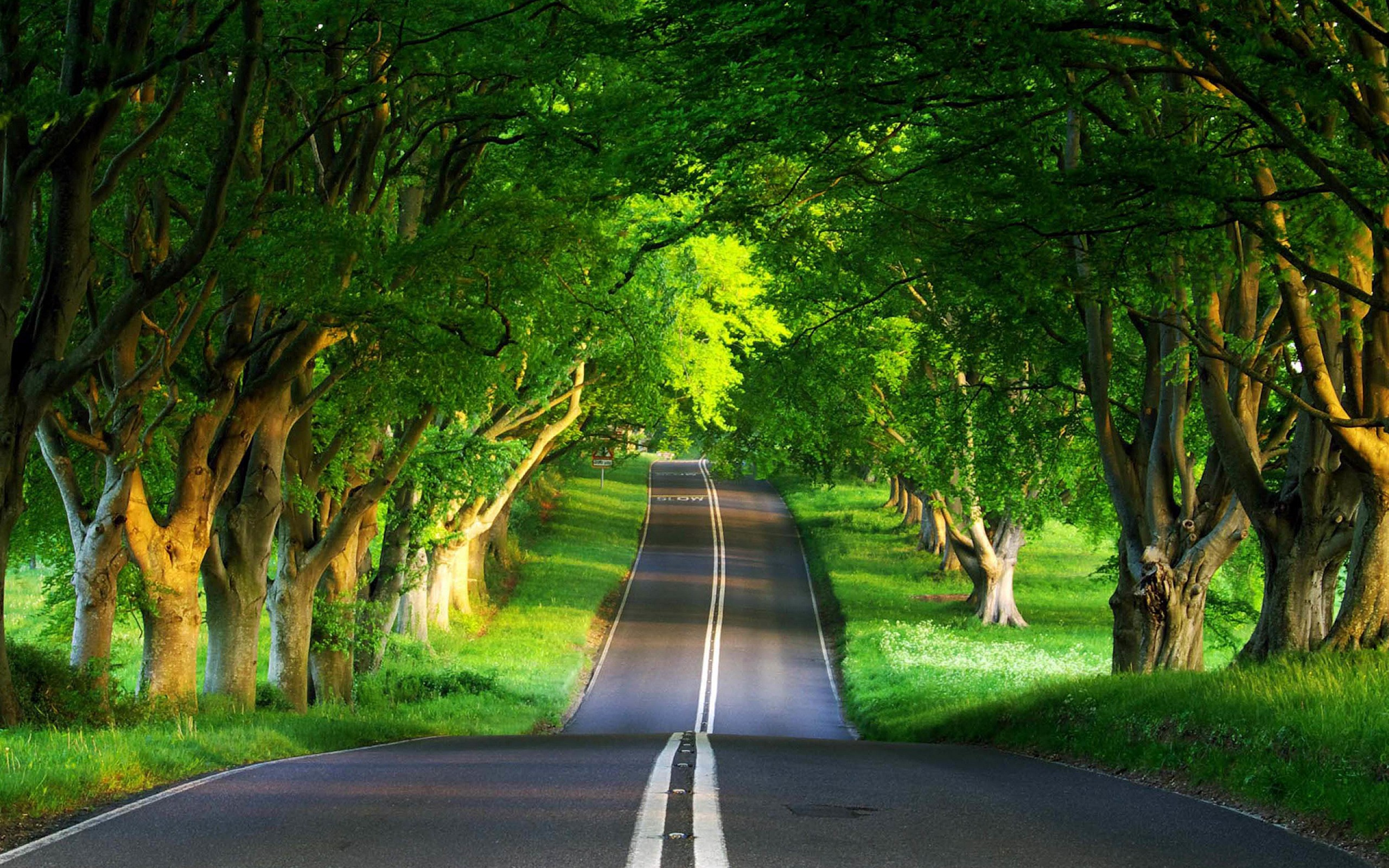 Amazing Forest Road