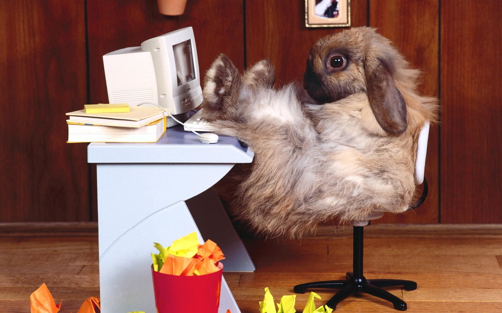 animals rabbits tech computer funny office