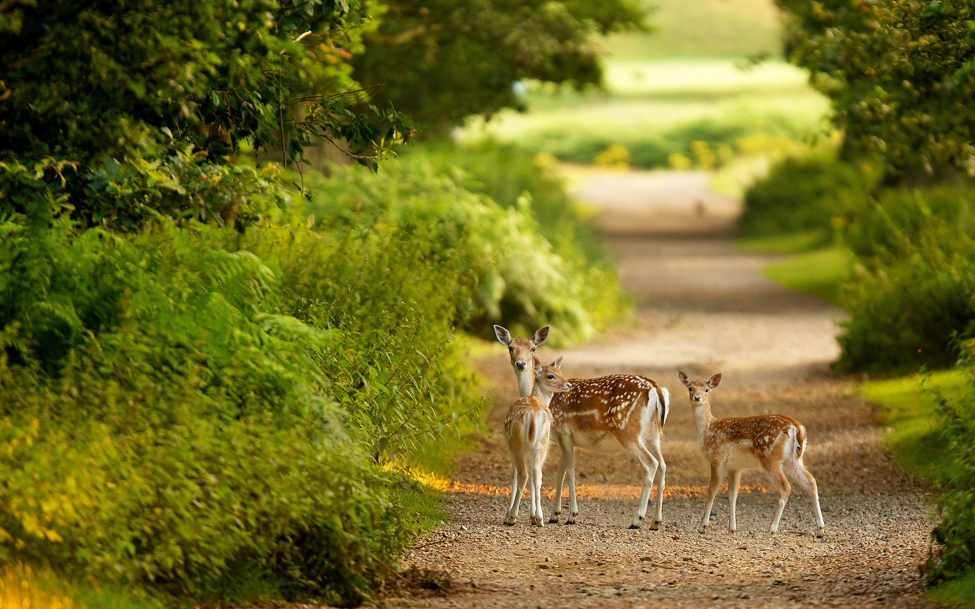 animals trees forest