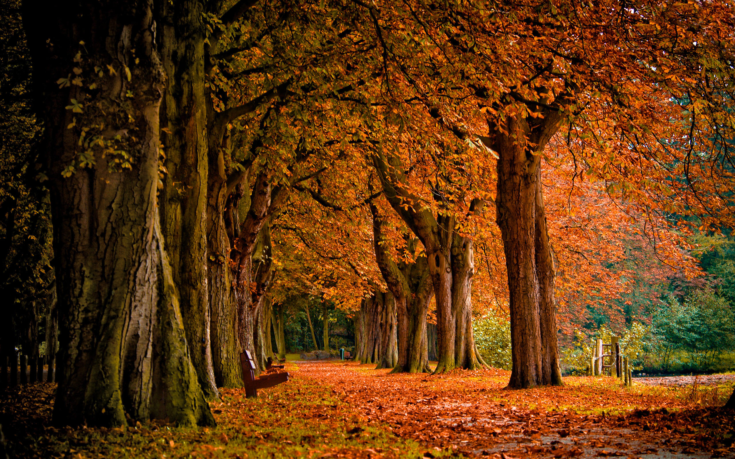 AUTUMN fall tree forest landscape nature leaves