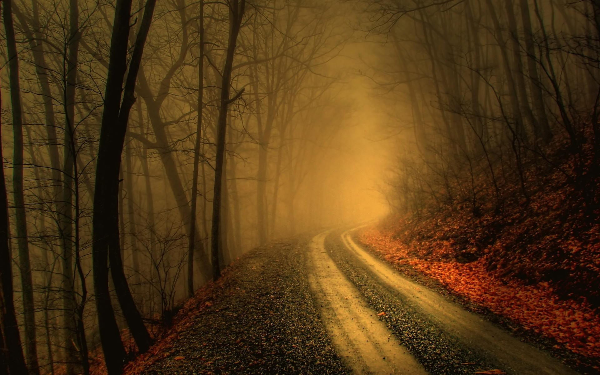 autumn road fog forest
