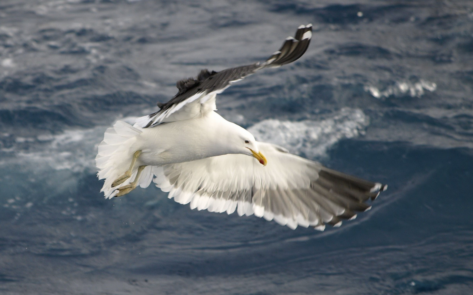 Awesome Seagulls