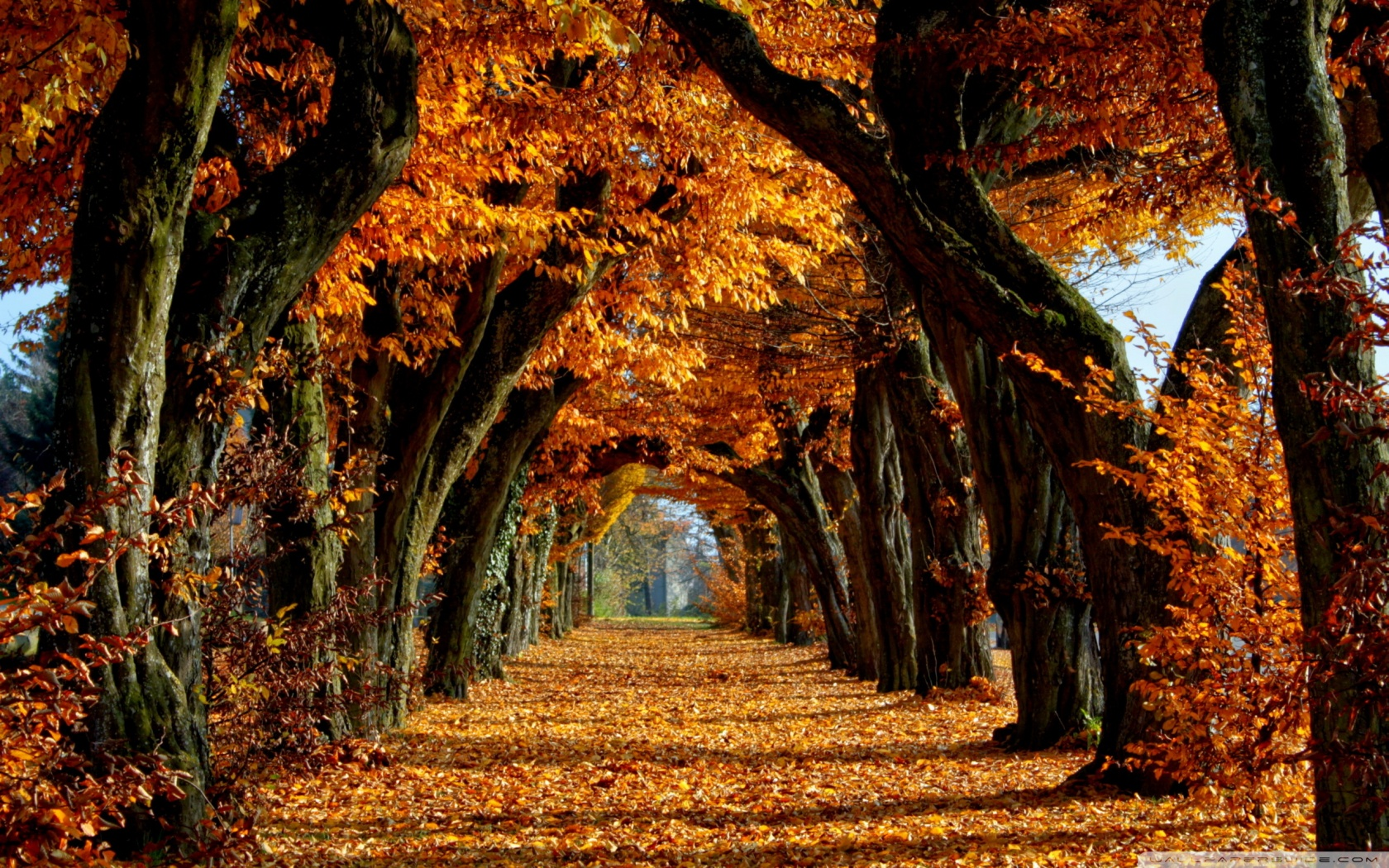Beautiful Path