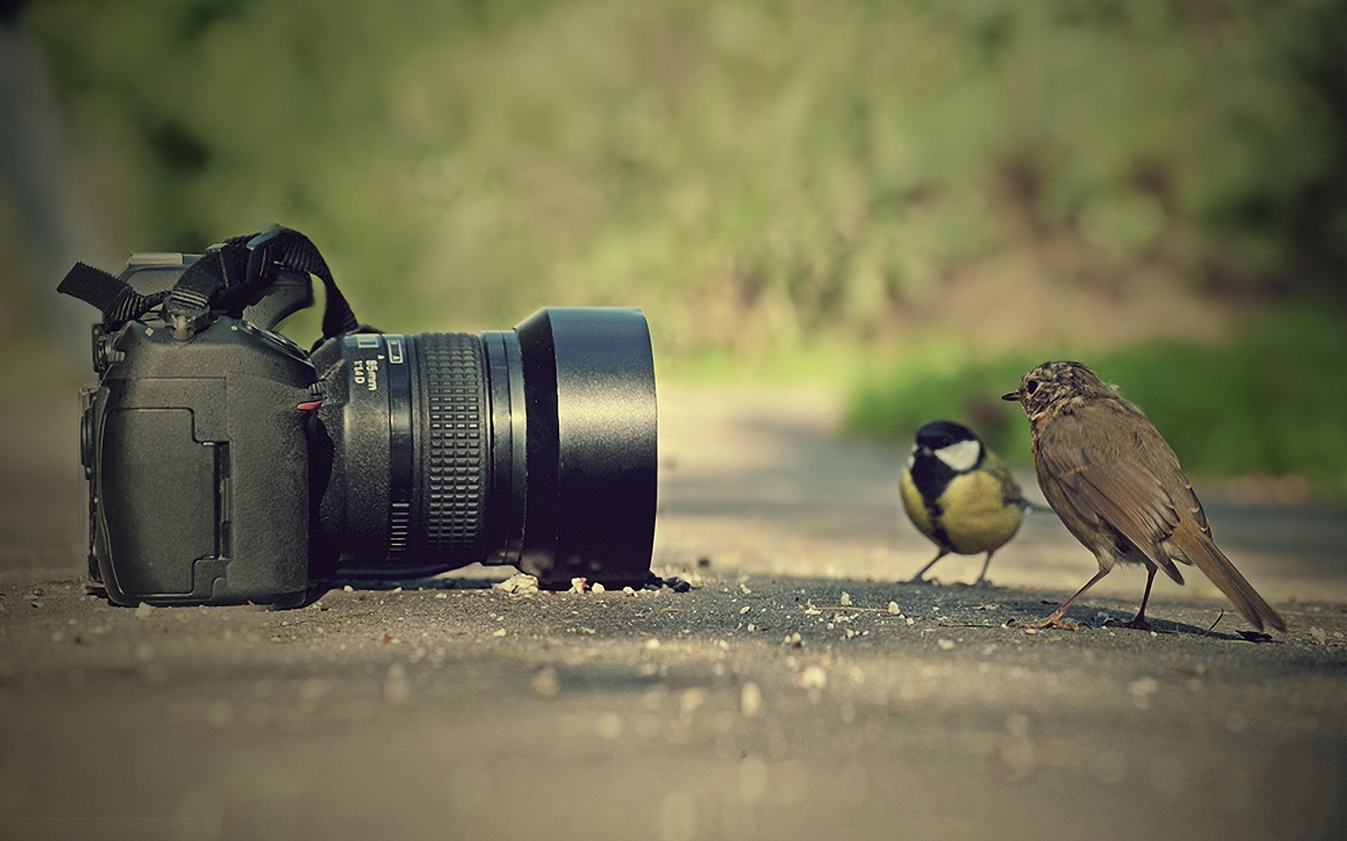 Birds getting photographed