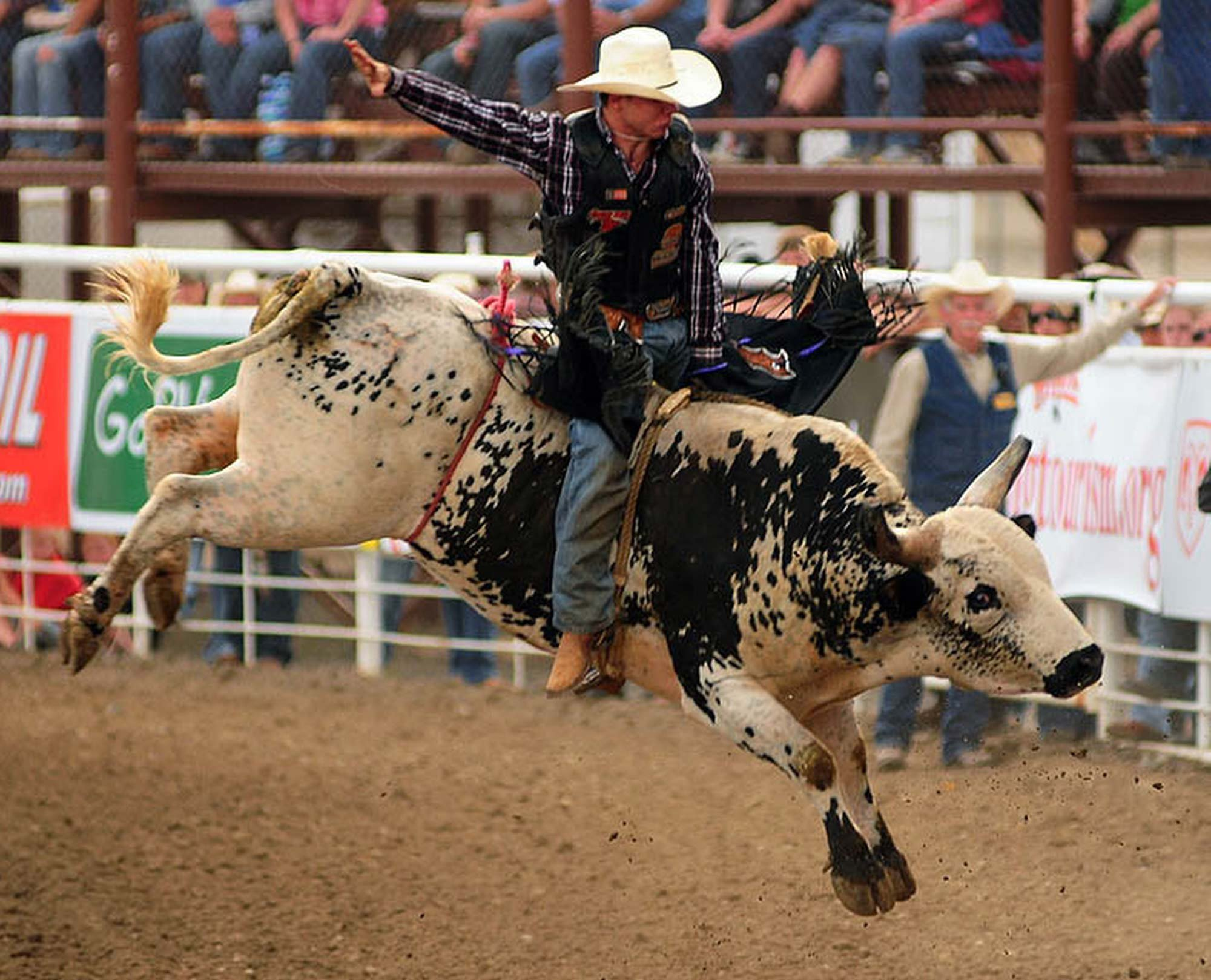bull riding bullrider rodeo western cowboy extreme cow (29)
