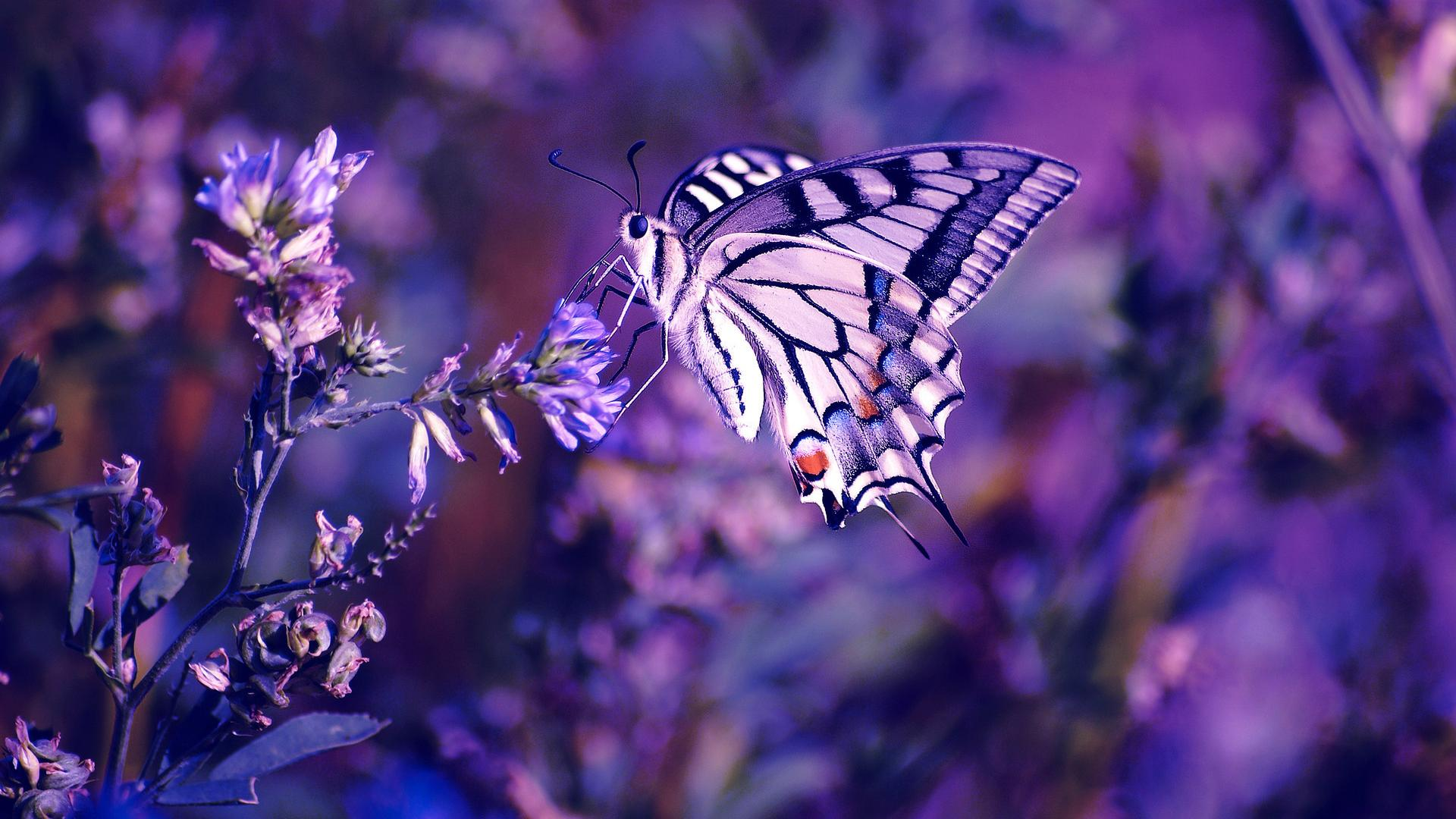 Butterfly Insect Plants