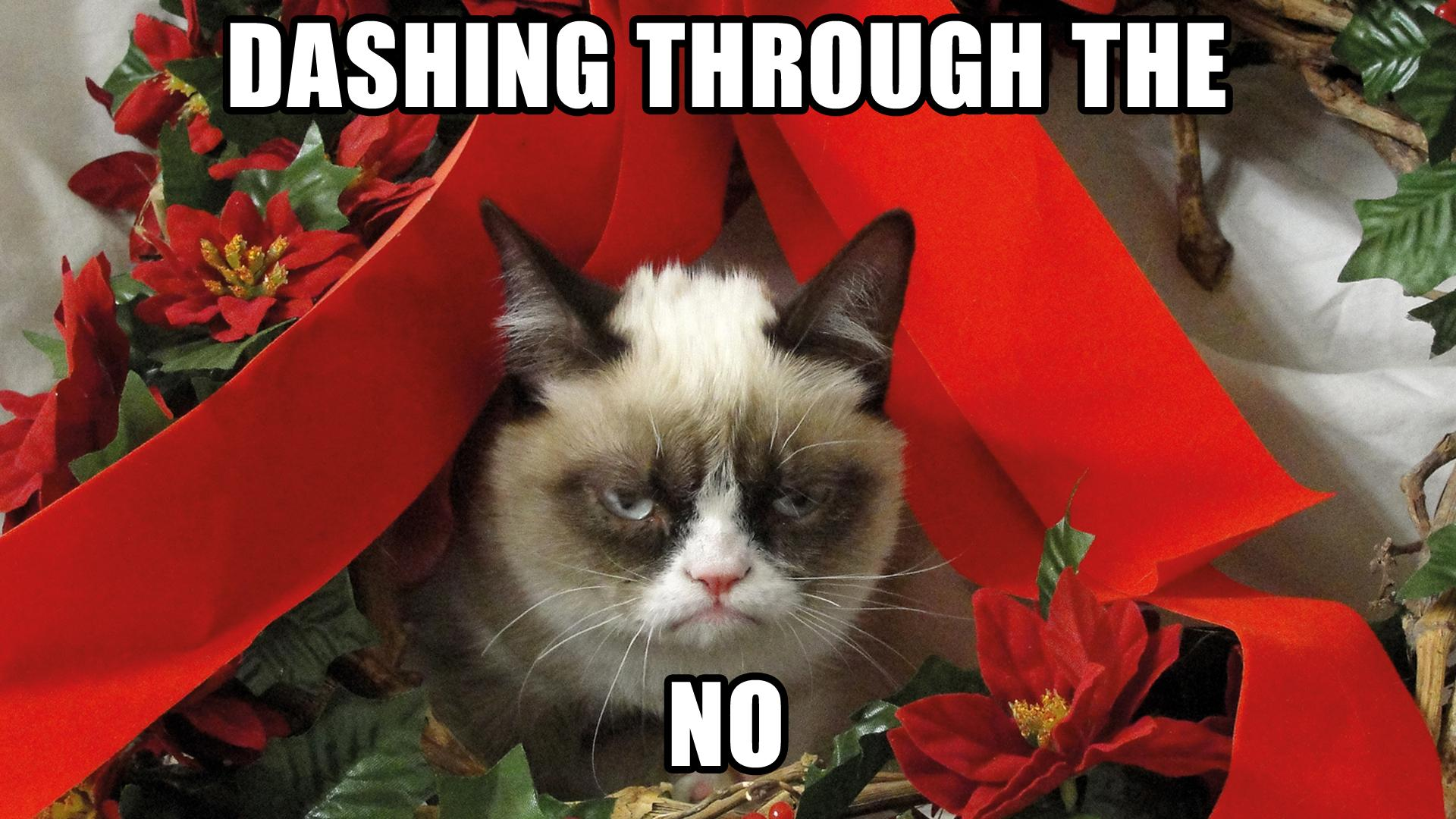 cat holiday humor funny