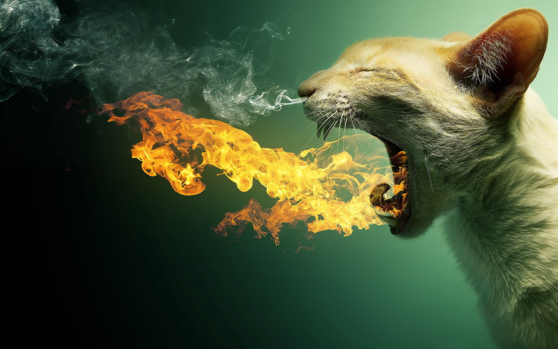 cats animals fire smoke funny DeviantART flaming photo manipulation