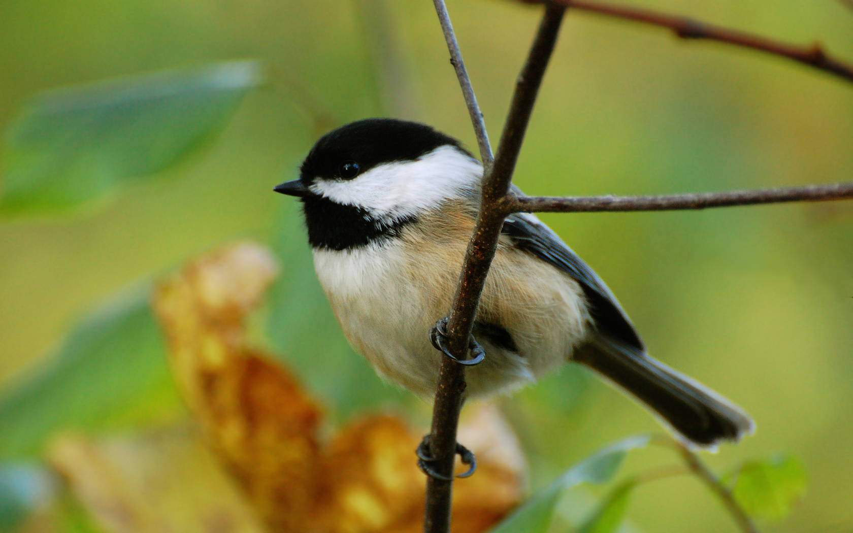 Chickadee Pictures