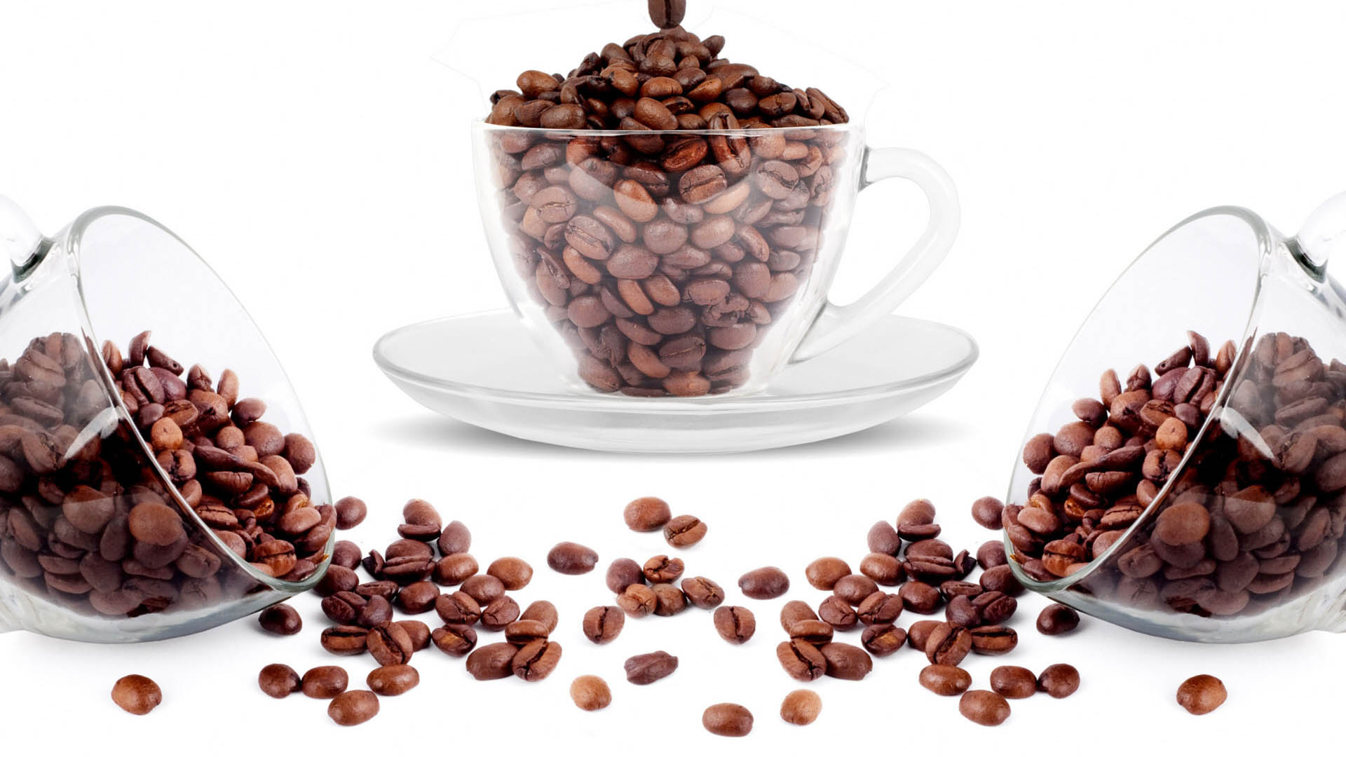 coffee drink plant seed lovely nature cup