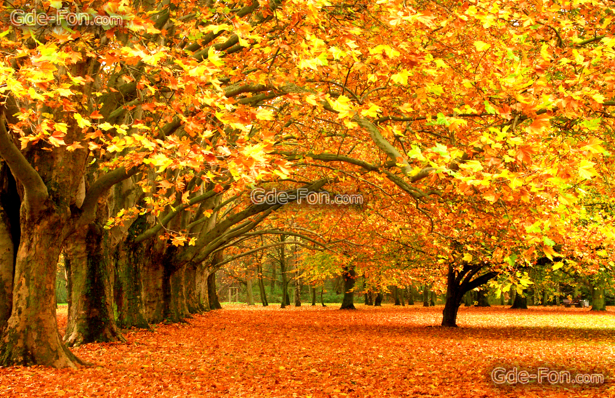 color autumn trees landscape