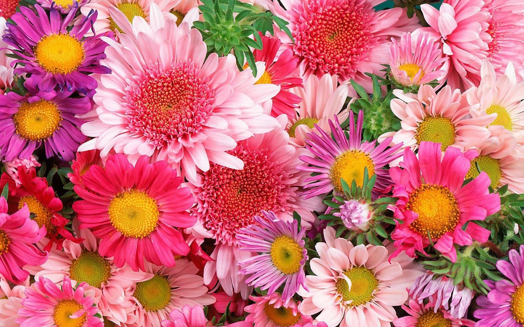 Colorful mums and daisies