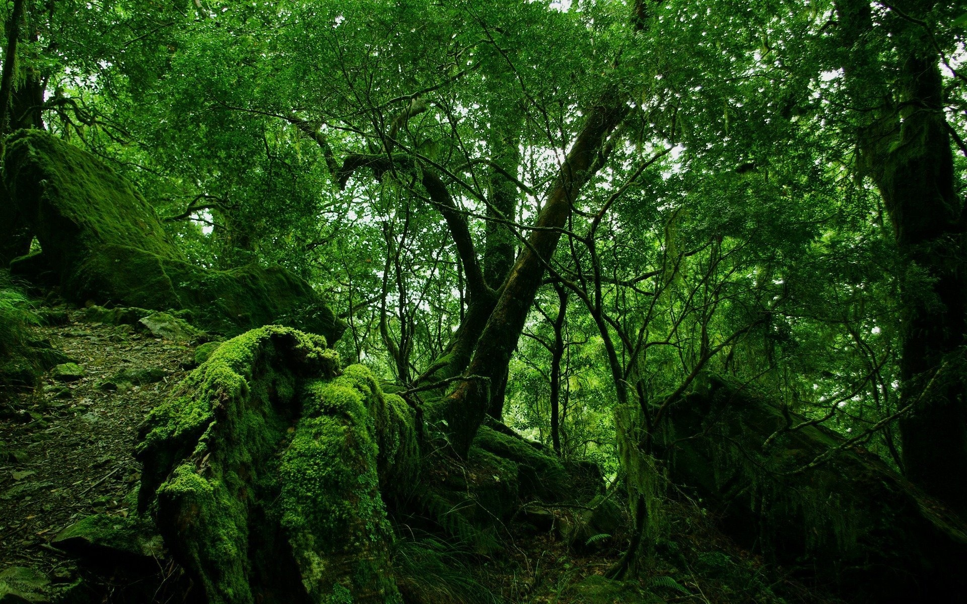 Cool Forest Moss