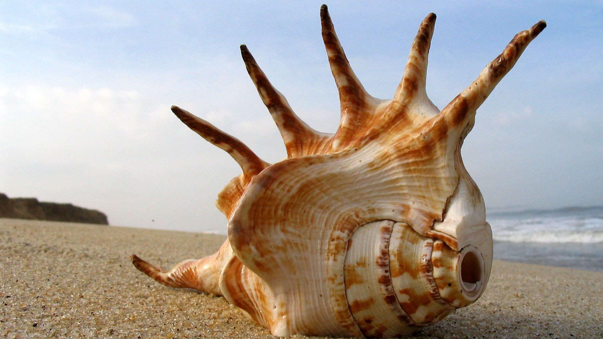 Cool Shell