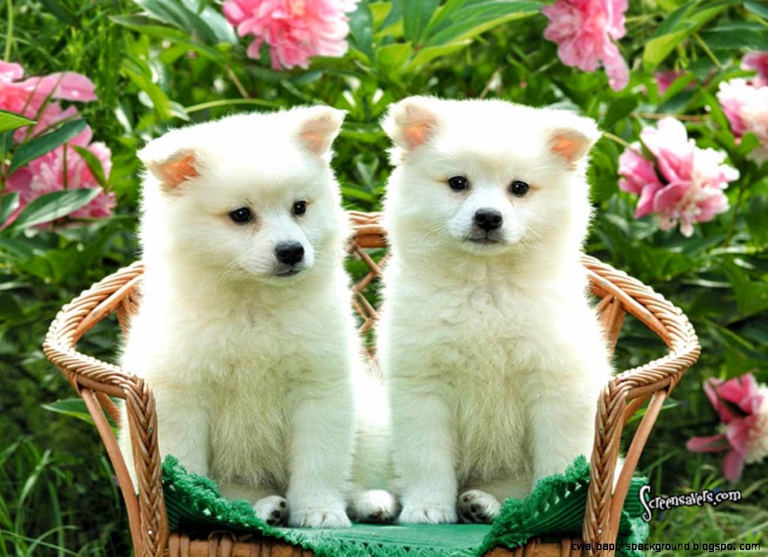 dog animal friendly puppy cute dogs