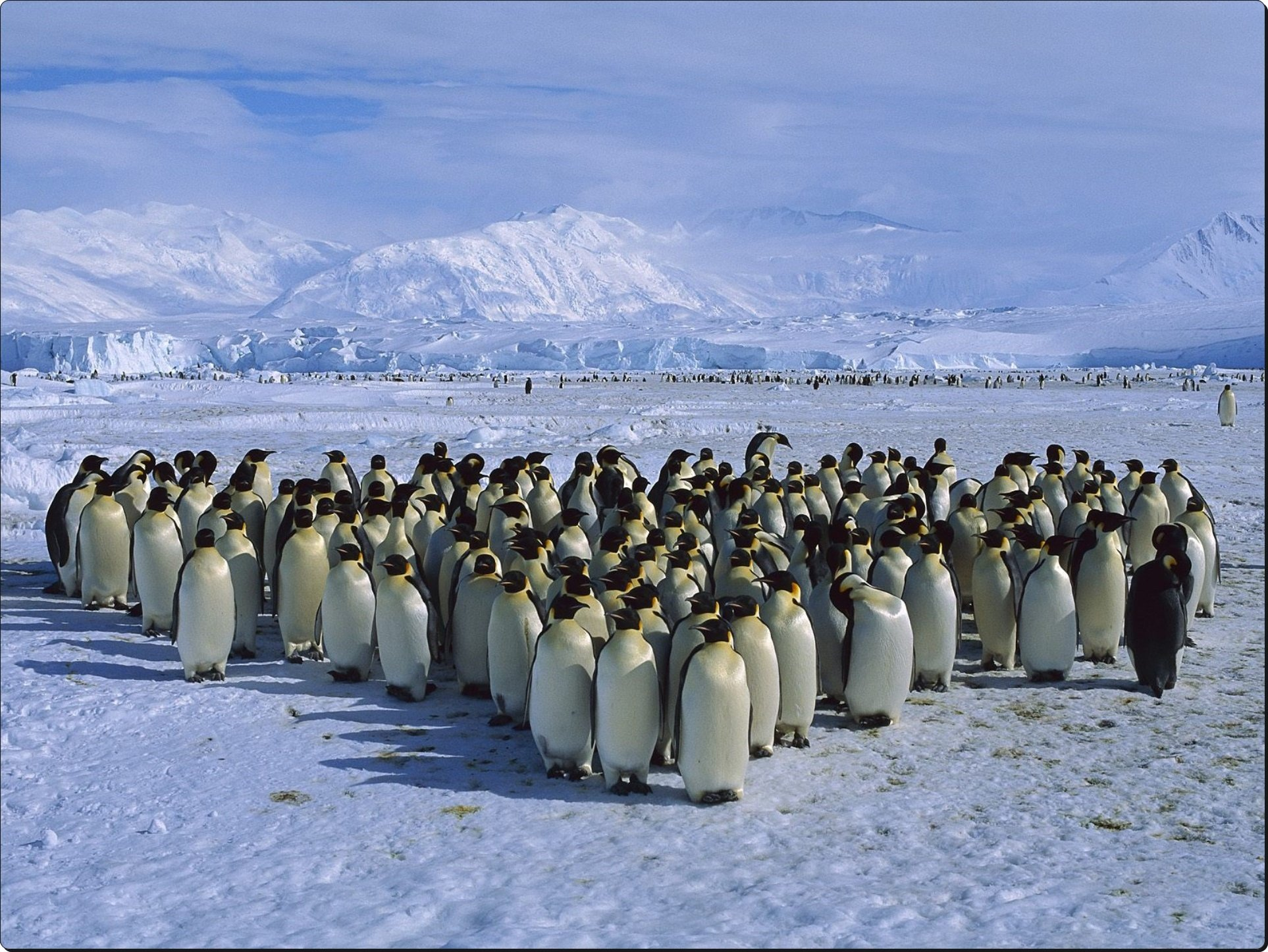 Emperor Penguin Colony Cape Roget Ross Sea Antarctica