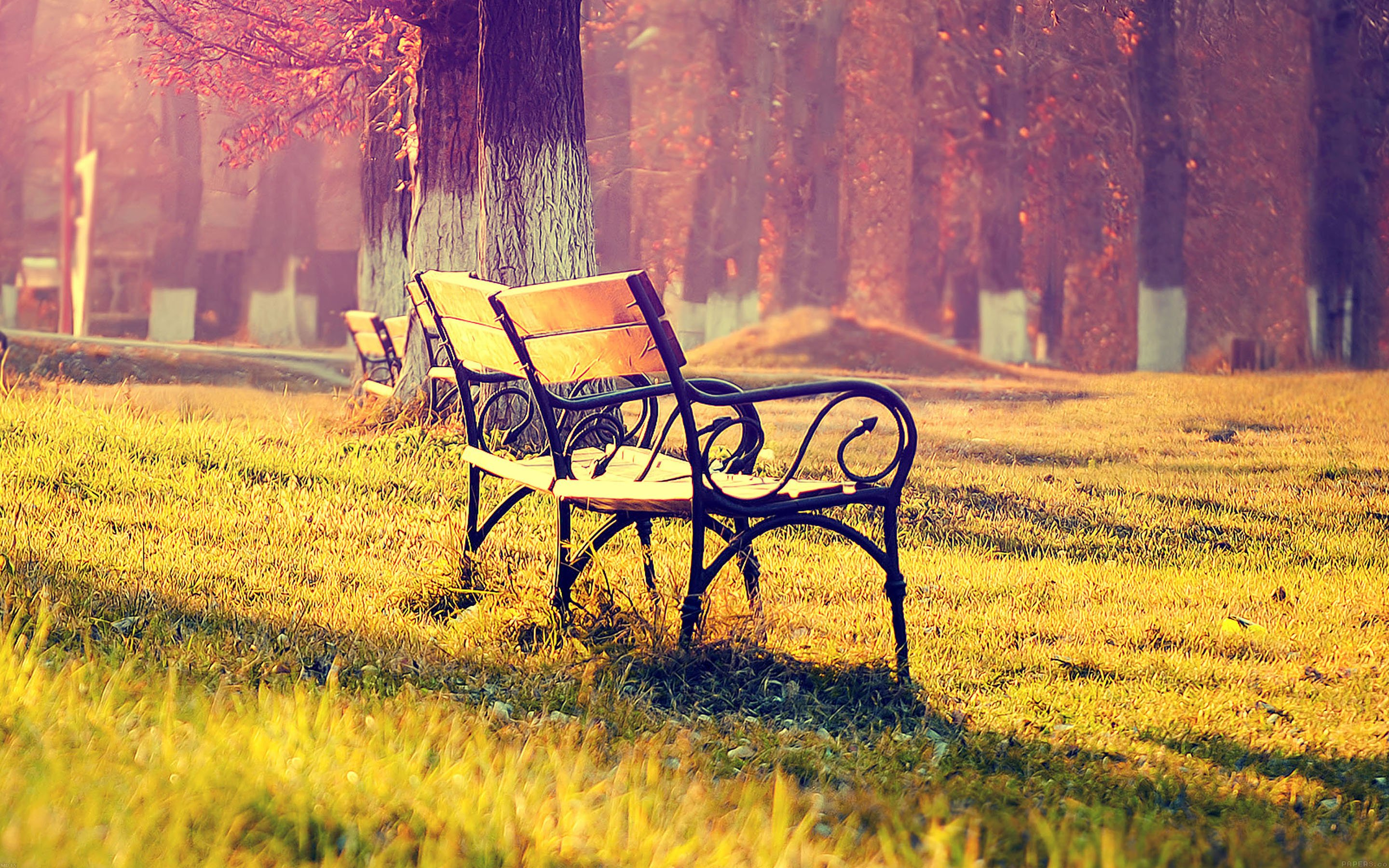 fall-park-chair-lonely-nature-