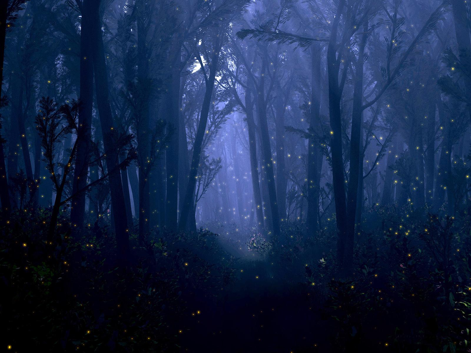 fantasy forest night bokeh trees firefly insect dream mood