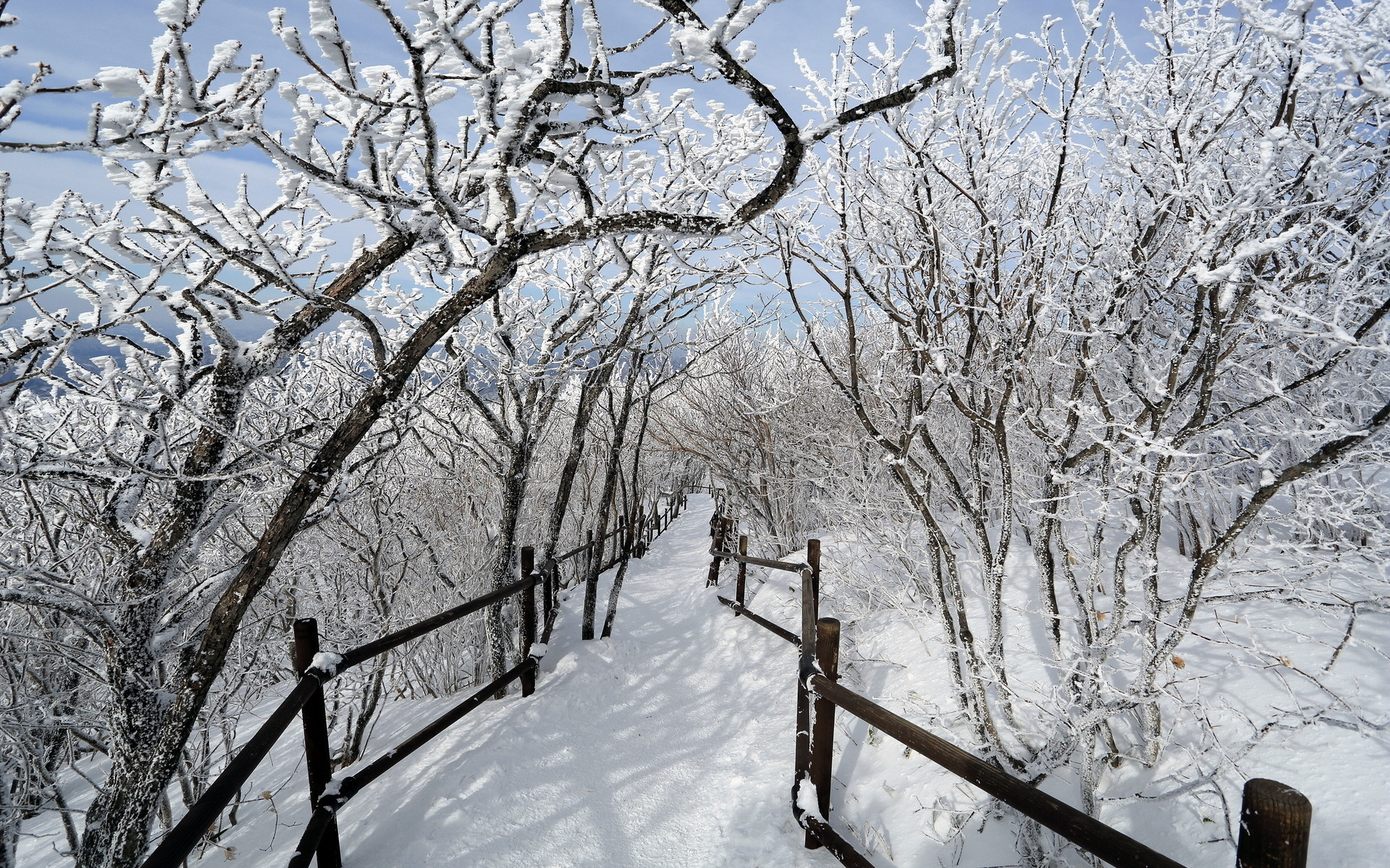 fence winter trees