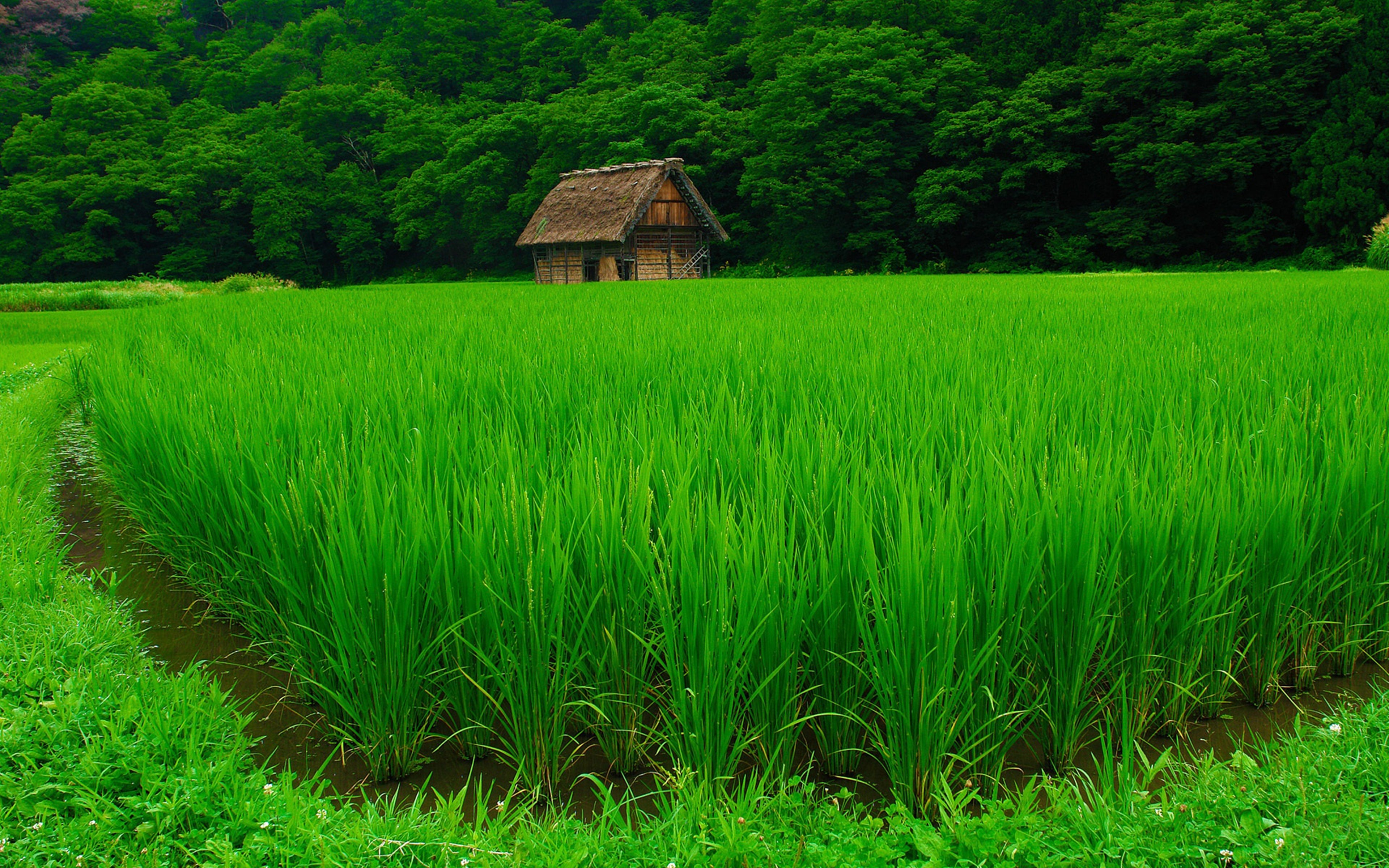 fields grass nature houses jungle forest green landscapes Agriculture countryside trees