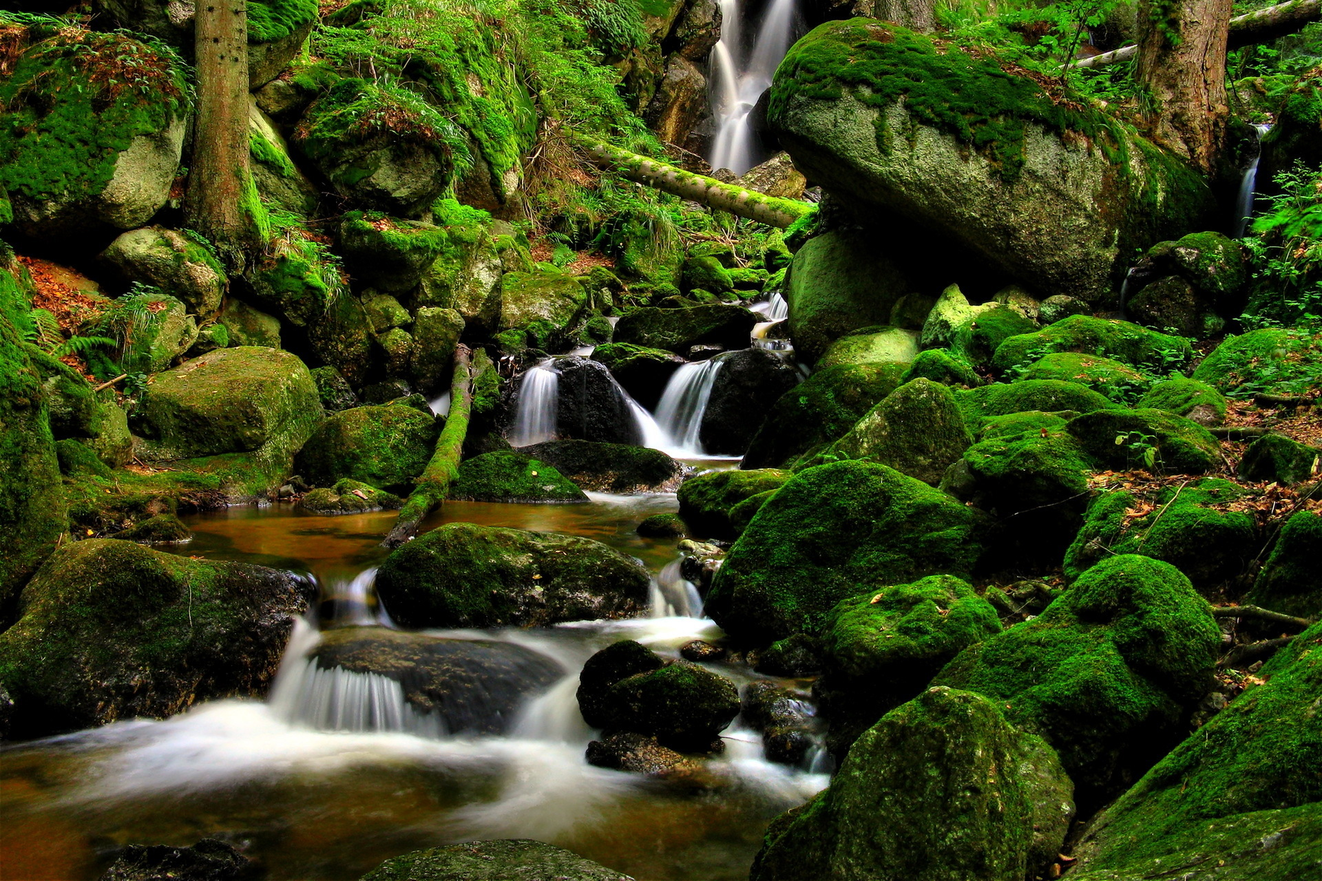 forest river waterfall trees rocks nature