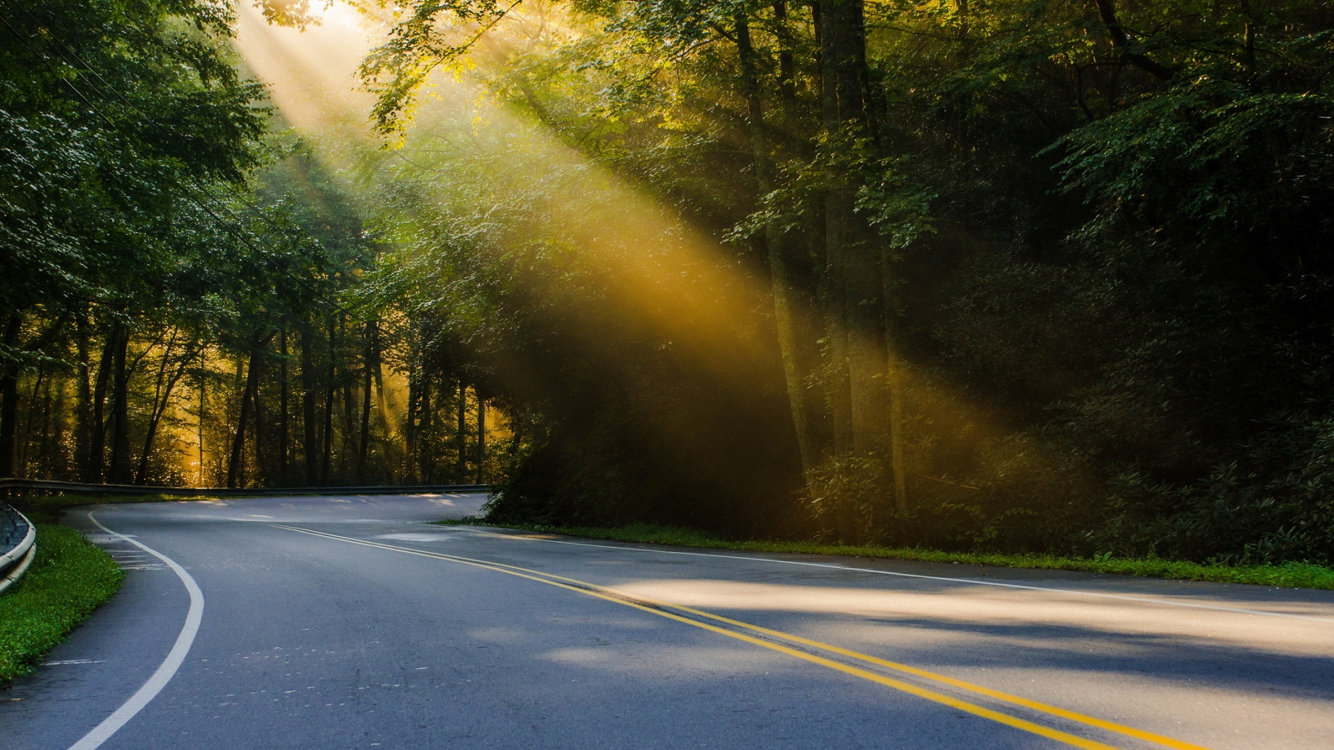 Forest Road Backgrounds