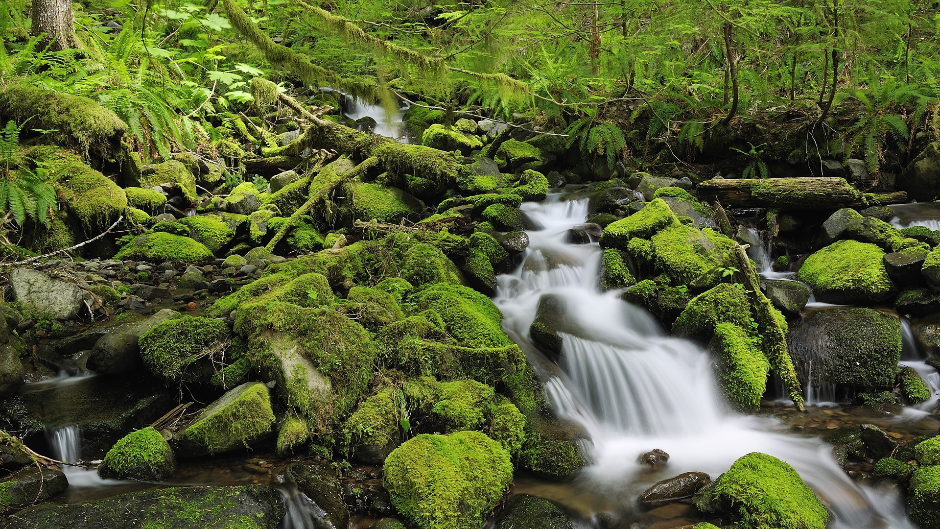 forest stream river waterfall nature