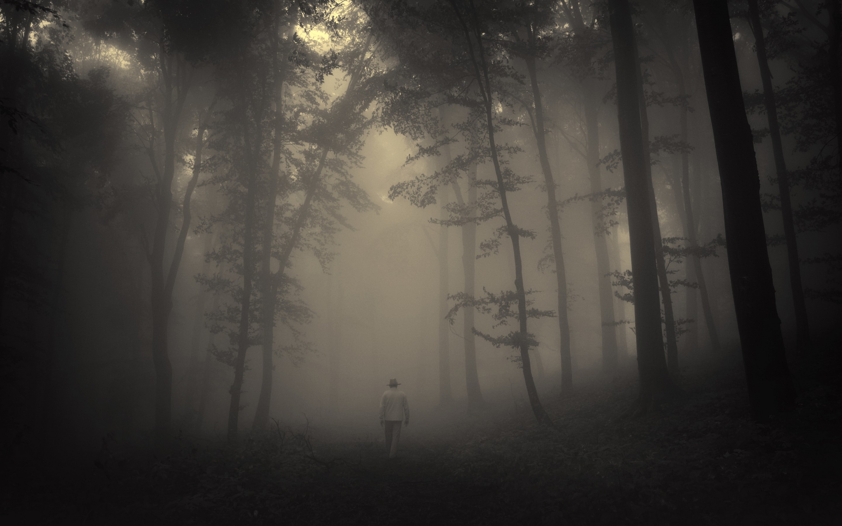 forest trees creepy nature landscape misty lonely old man road mood