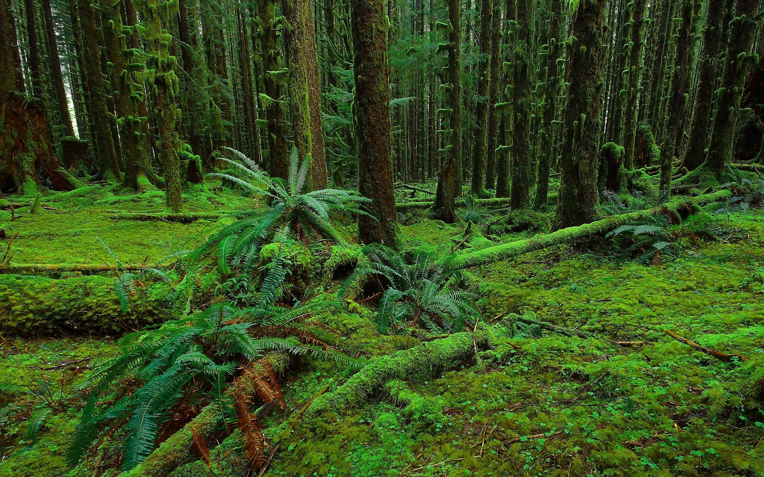 forest trees moss fern nature   y