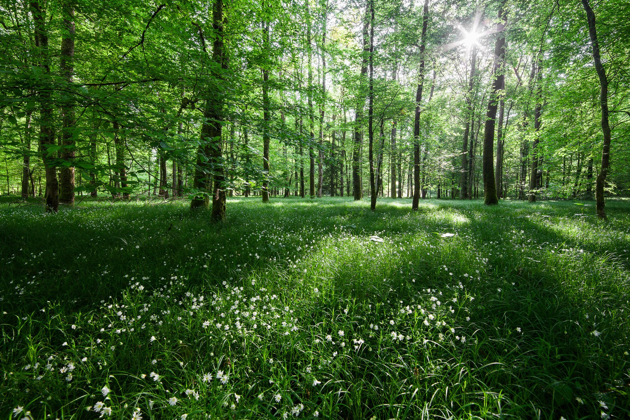 forest trees nature light flowers