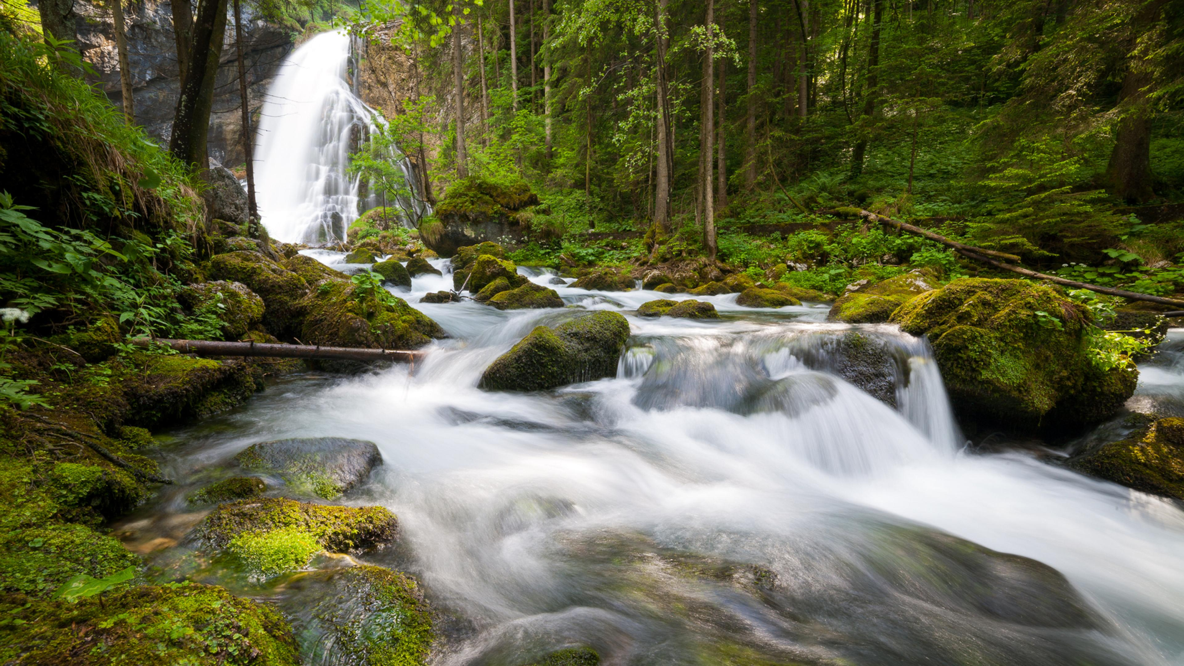 forest trees river waterfall nature