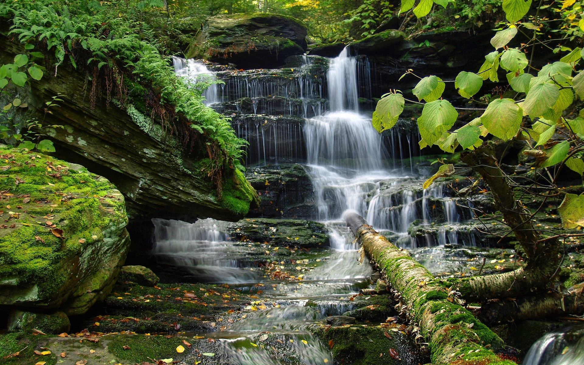 forest vegetation waterfall