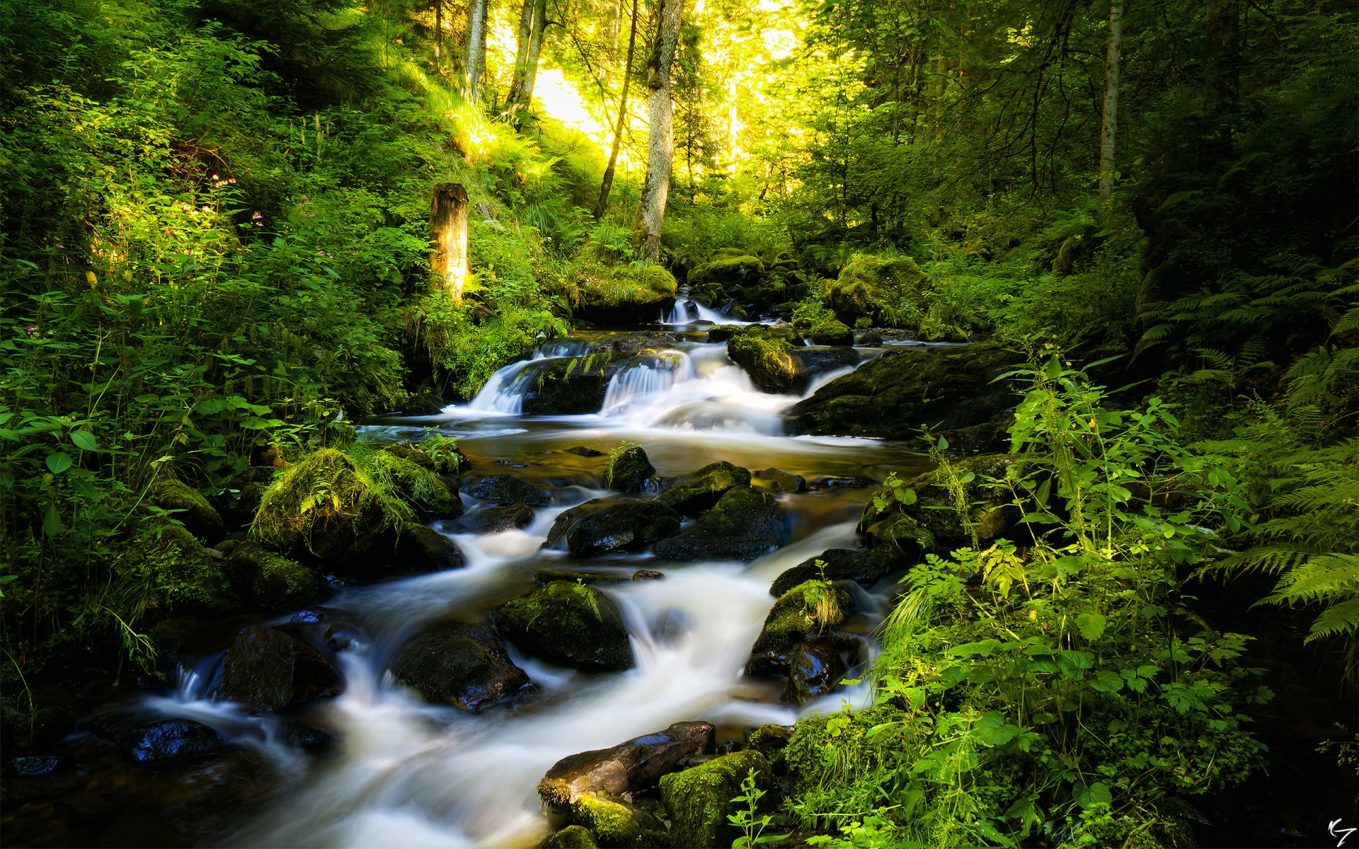 forest waterfall trees landscape