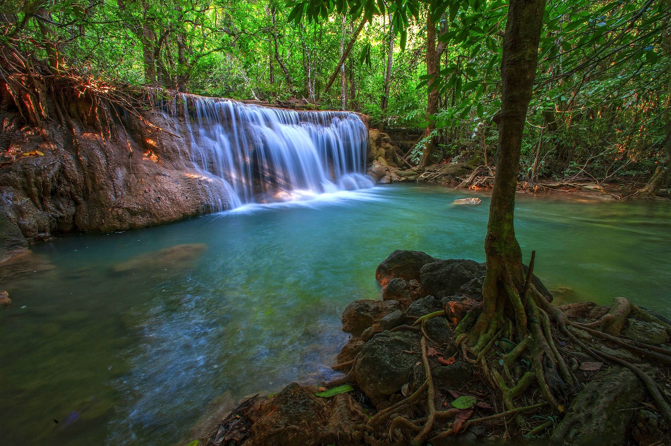 jungle forest trees stream waterfall rocks nature