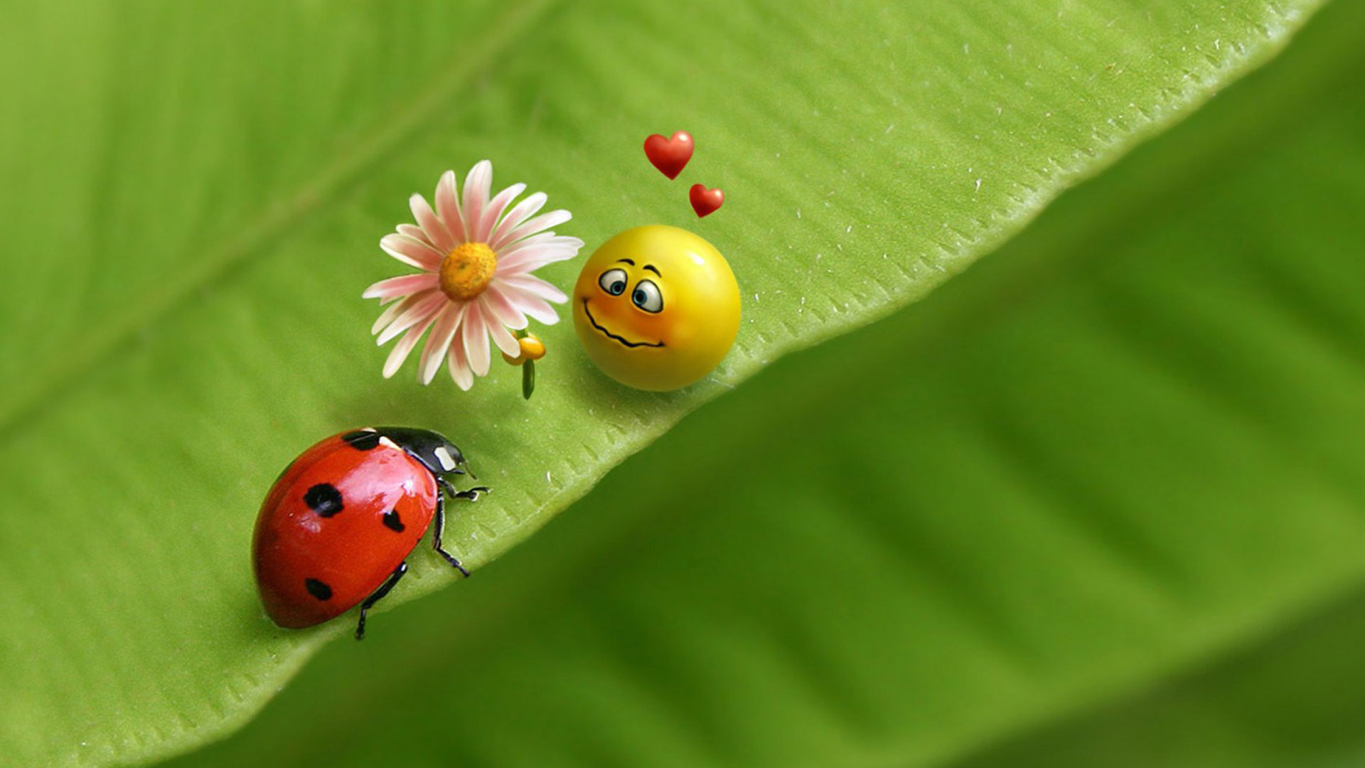 Ladybug and smiley face in love