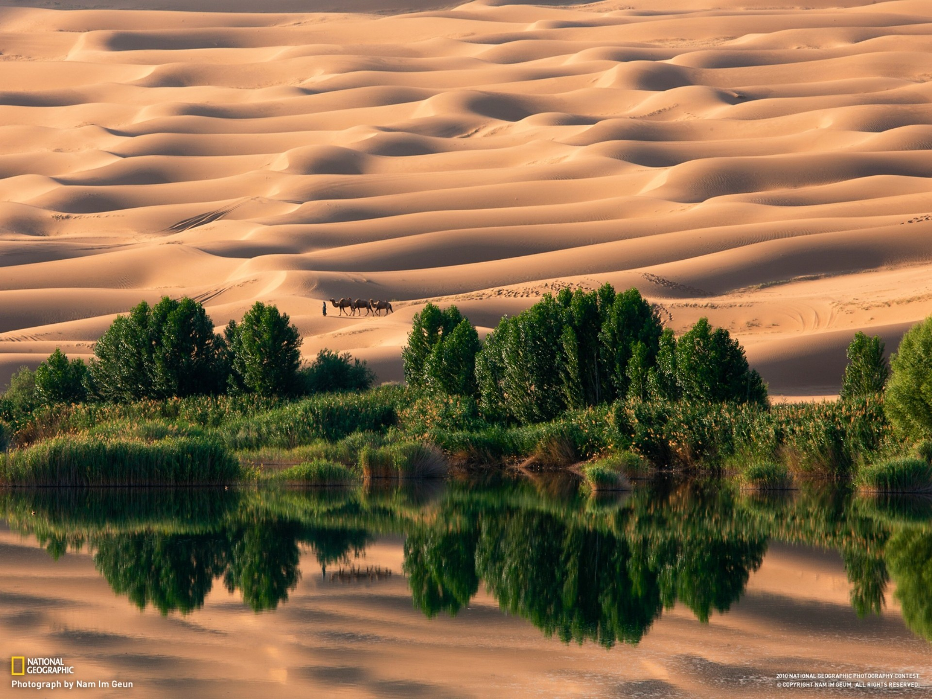 Landscapes nature desert national geographic oasis camels sand dunes reflections