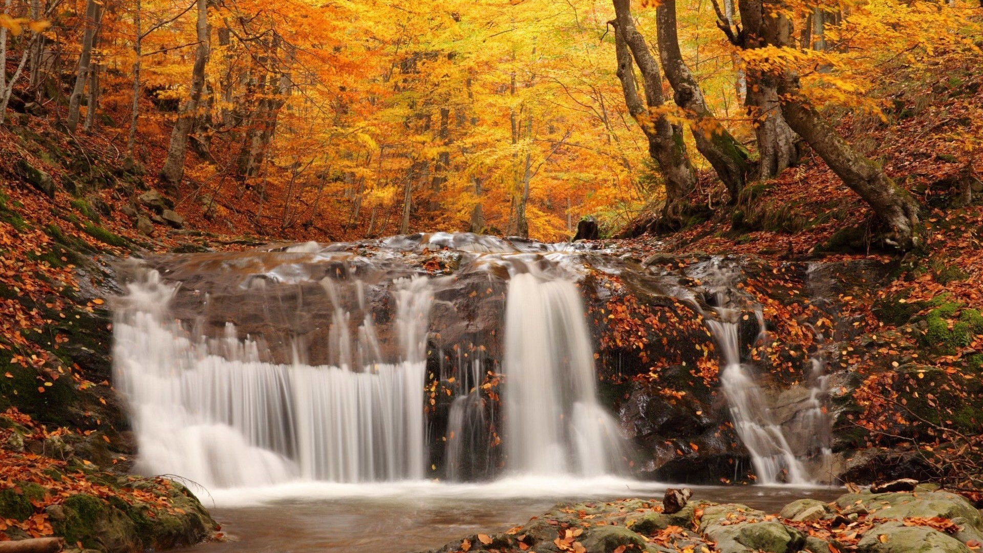 landscapes nature trees forest autumn fall seasons waterfall
