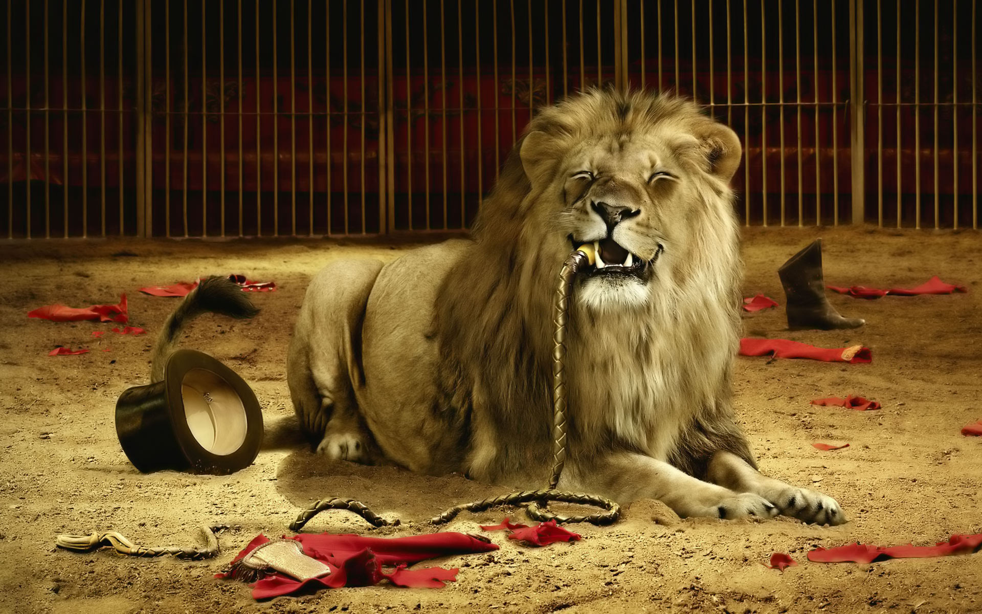 Lion ate the tamer
