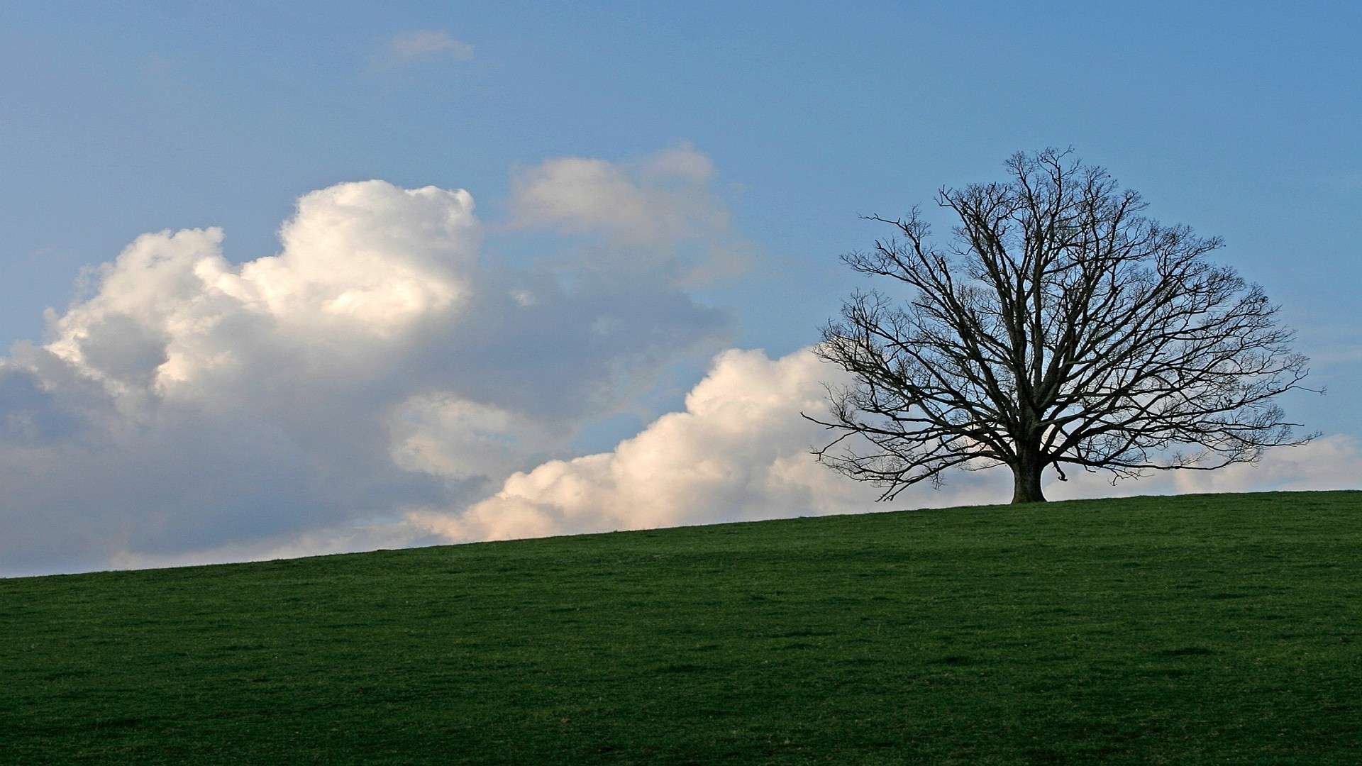 Lone tree on the hilltop