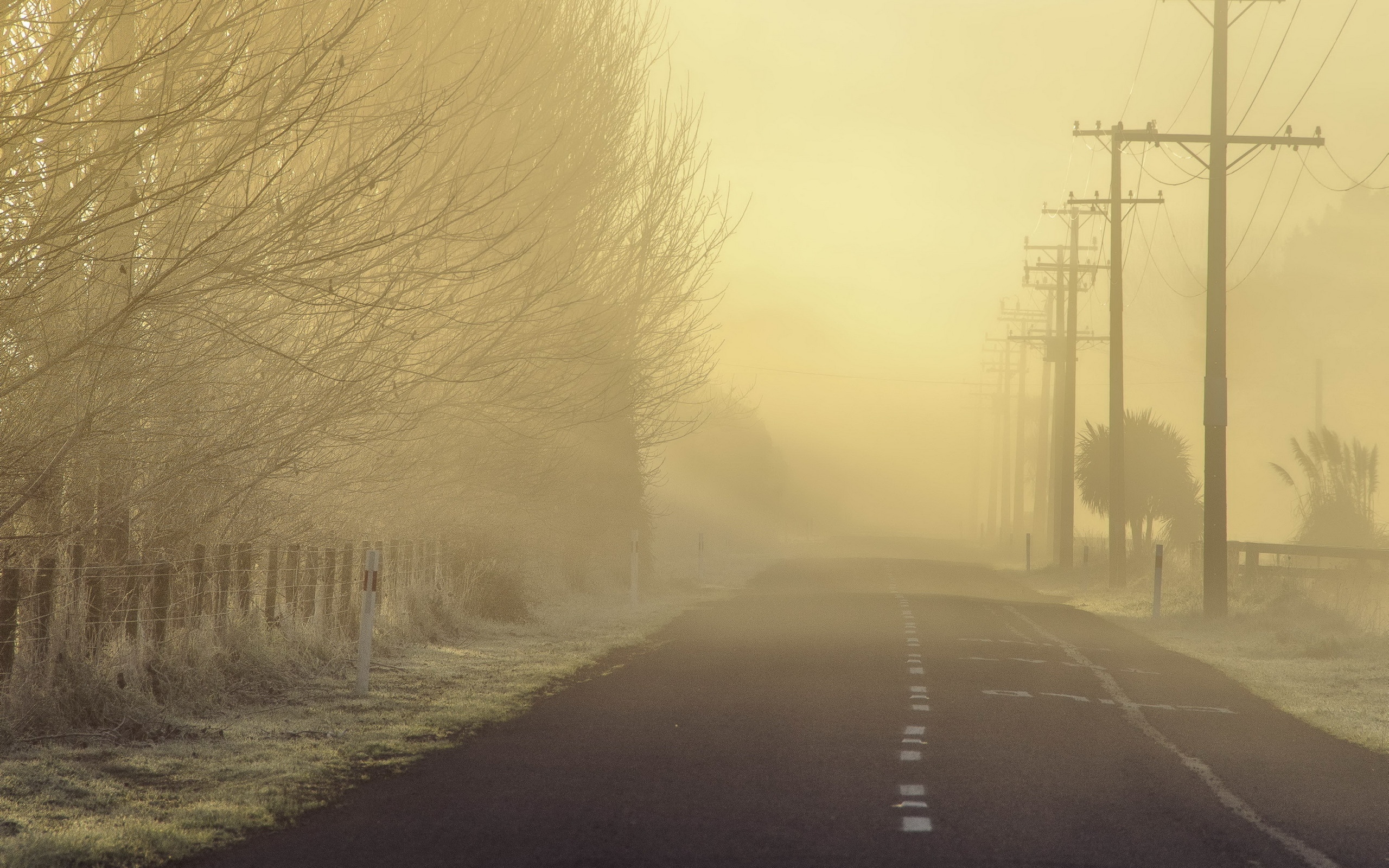 morning road fog landscape mood