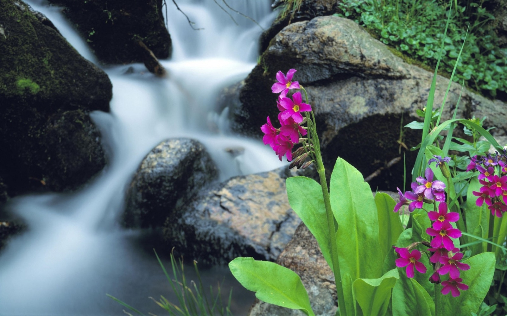 nature flowers waterfalls waterscapes
