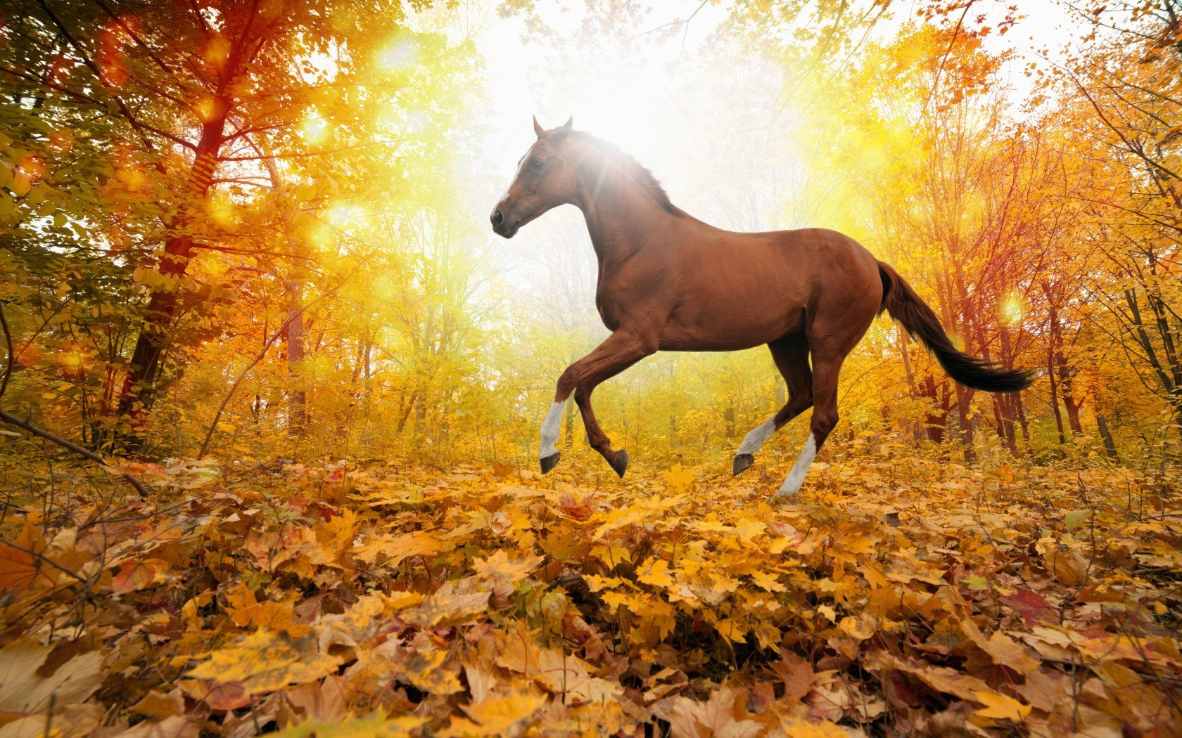 nature forest leaves fall horse