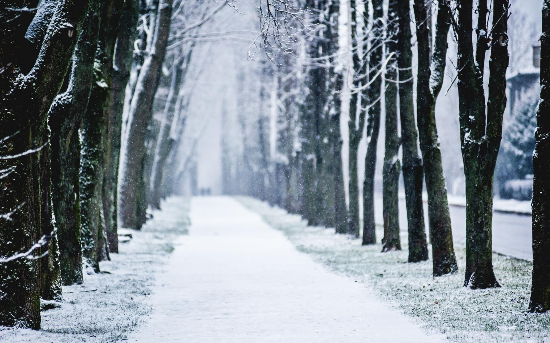 nature landscape roads path sidewalk trail tracks trees lane winter snow seasons snowing flakes drops cold