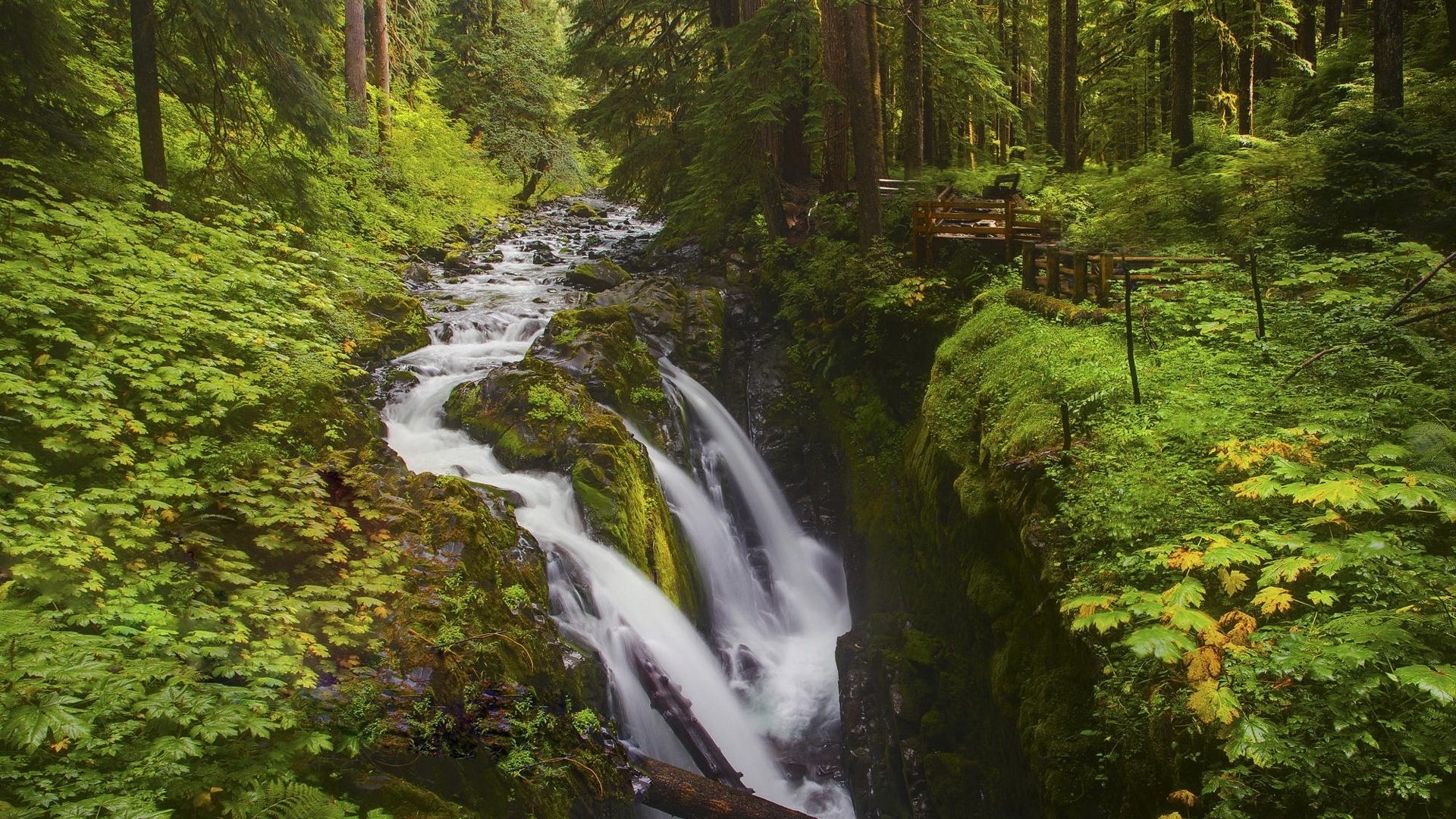 nature landscapes trees forest river stream green cliff scenic