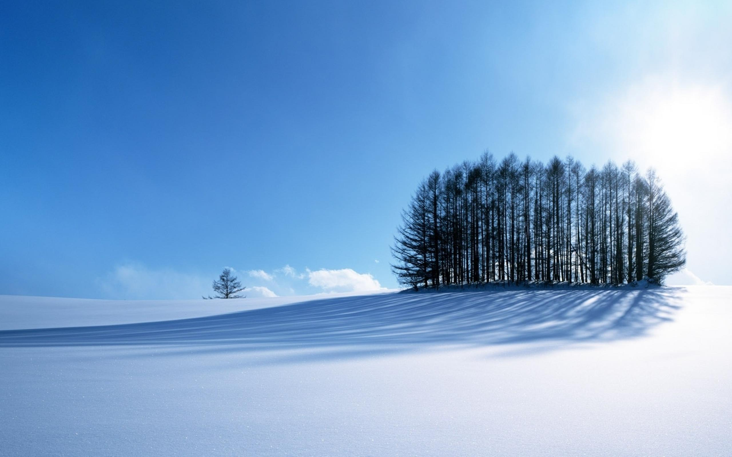 nature landscapes winter trees snow