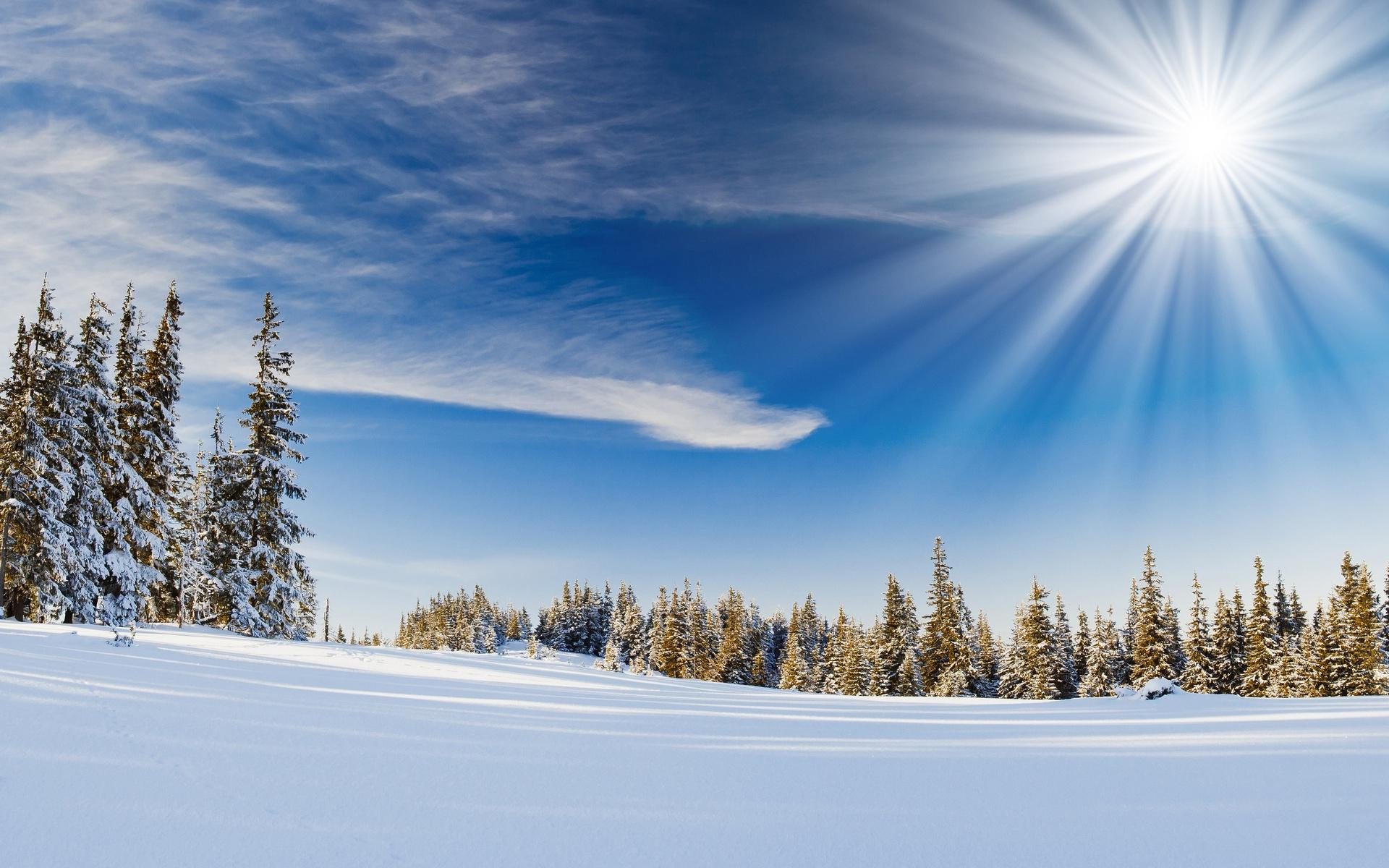 nature snow trees forests sunlight