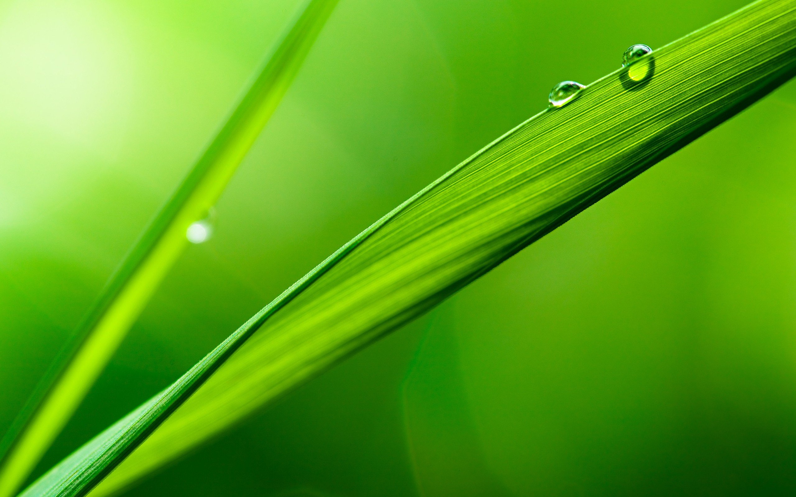 nature water drops macro green leaves plants