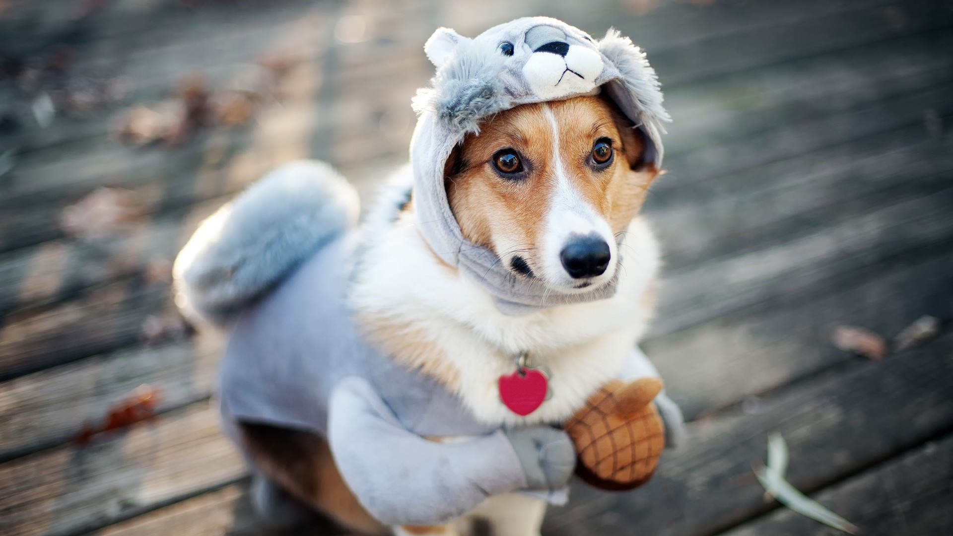 Puppy dressed in a squirrel suit