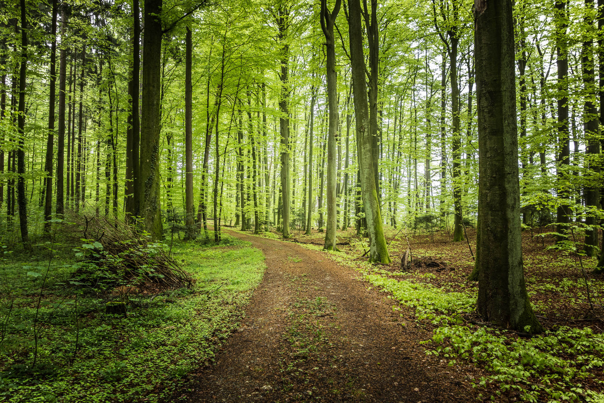 road forest trees landscape f